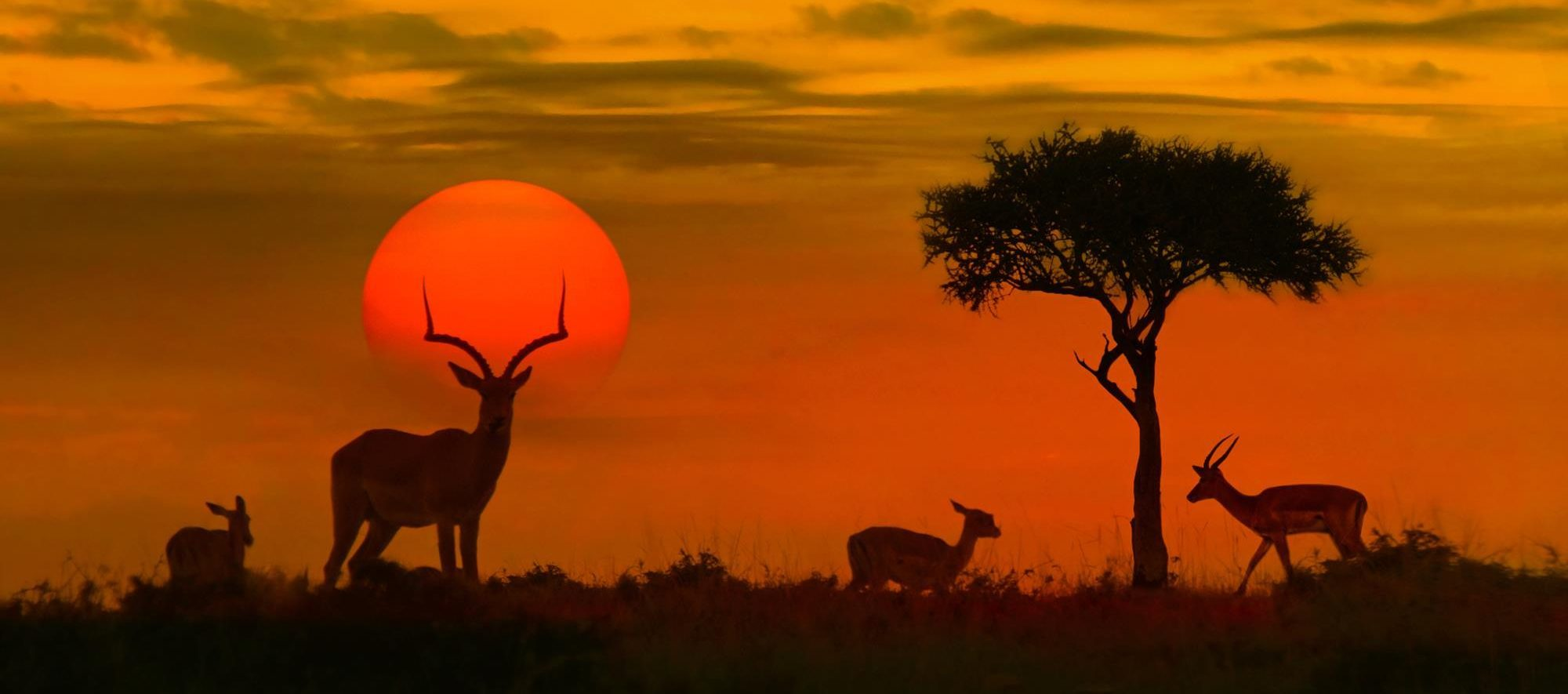 south africa safari sunset